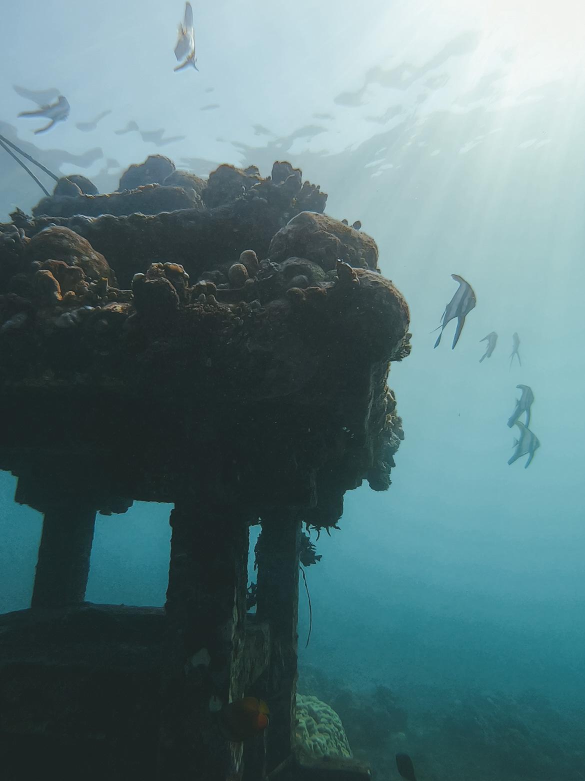 Snorkeling nella Baia Jemeluk ad Amed Bali