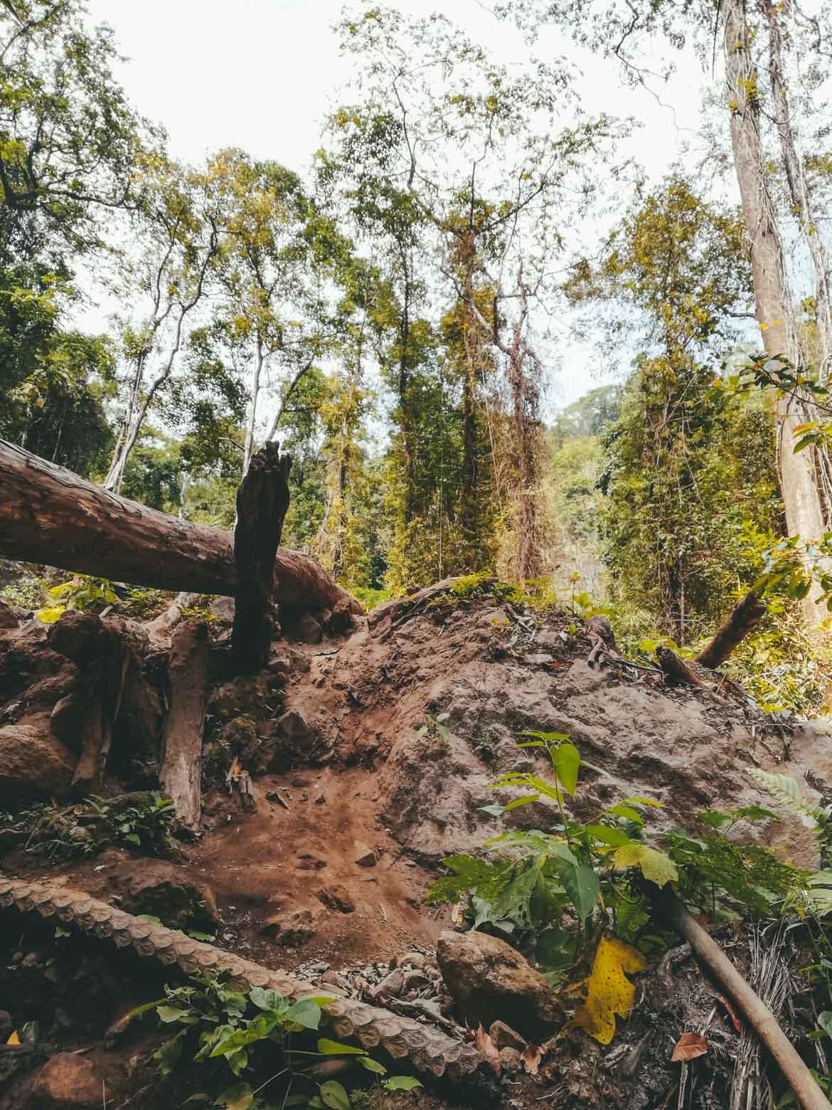 Scavalcare tronchi caduti sul sentiero per Tiu Kelep