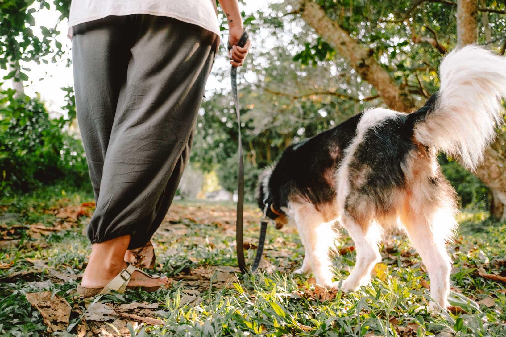 Passeggiata con John John al Langkawi Lassie