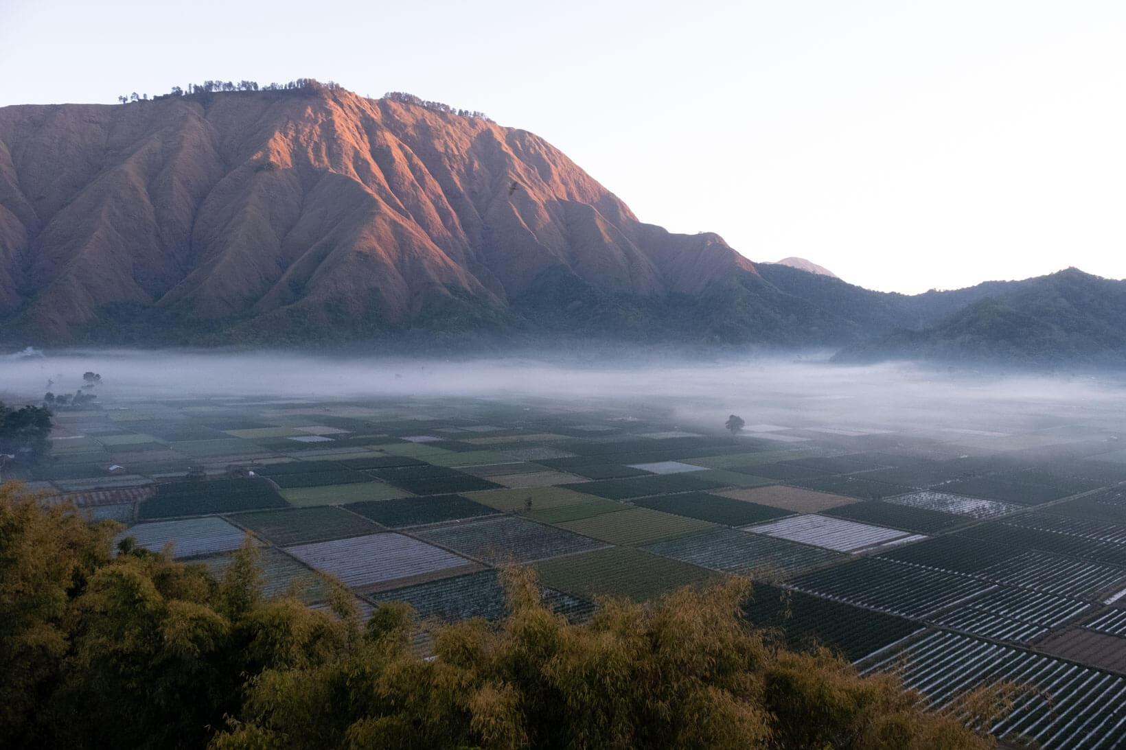 Nebbia prima dell'alba