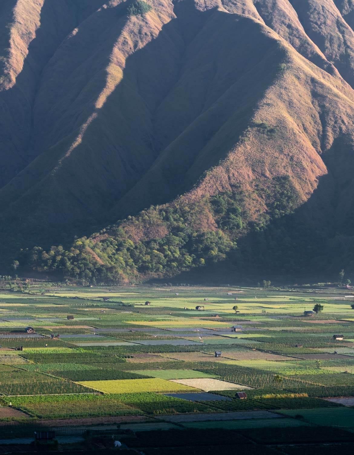 Campi all'alba da Bukit Selong