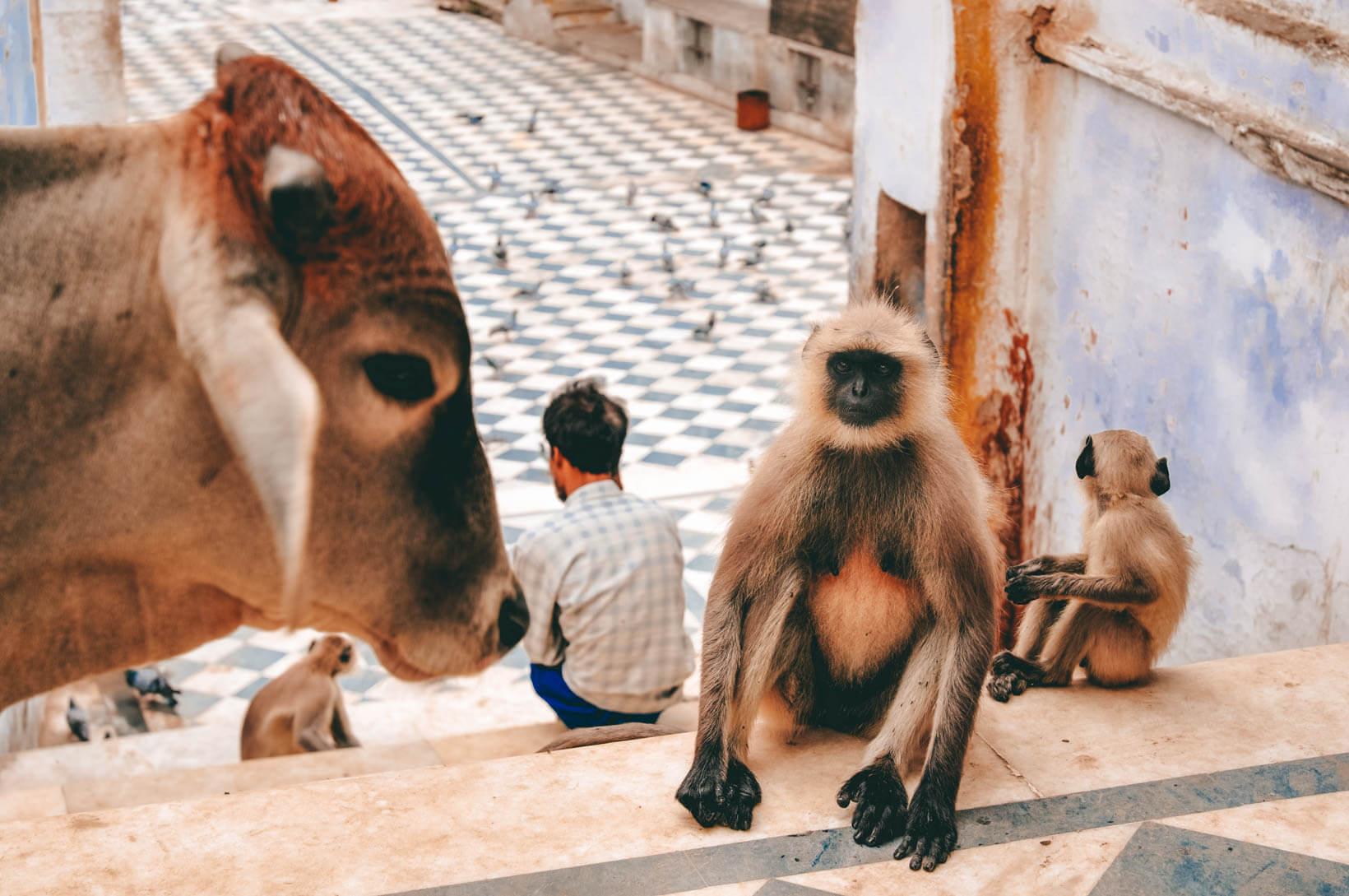 Pushkar incontri