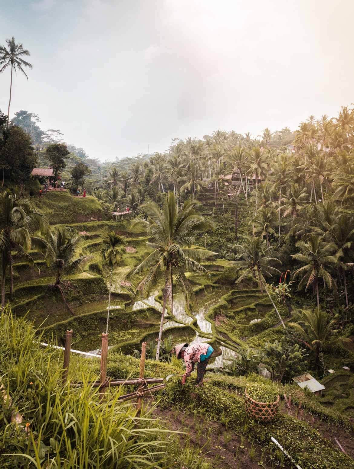 terrazze Tegallalang