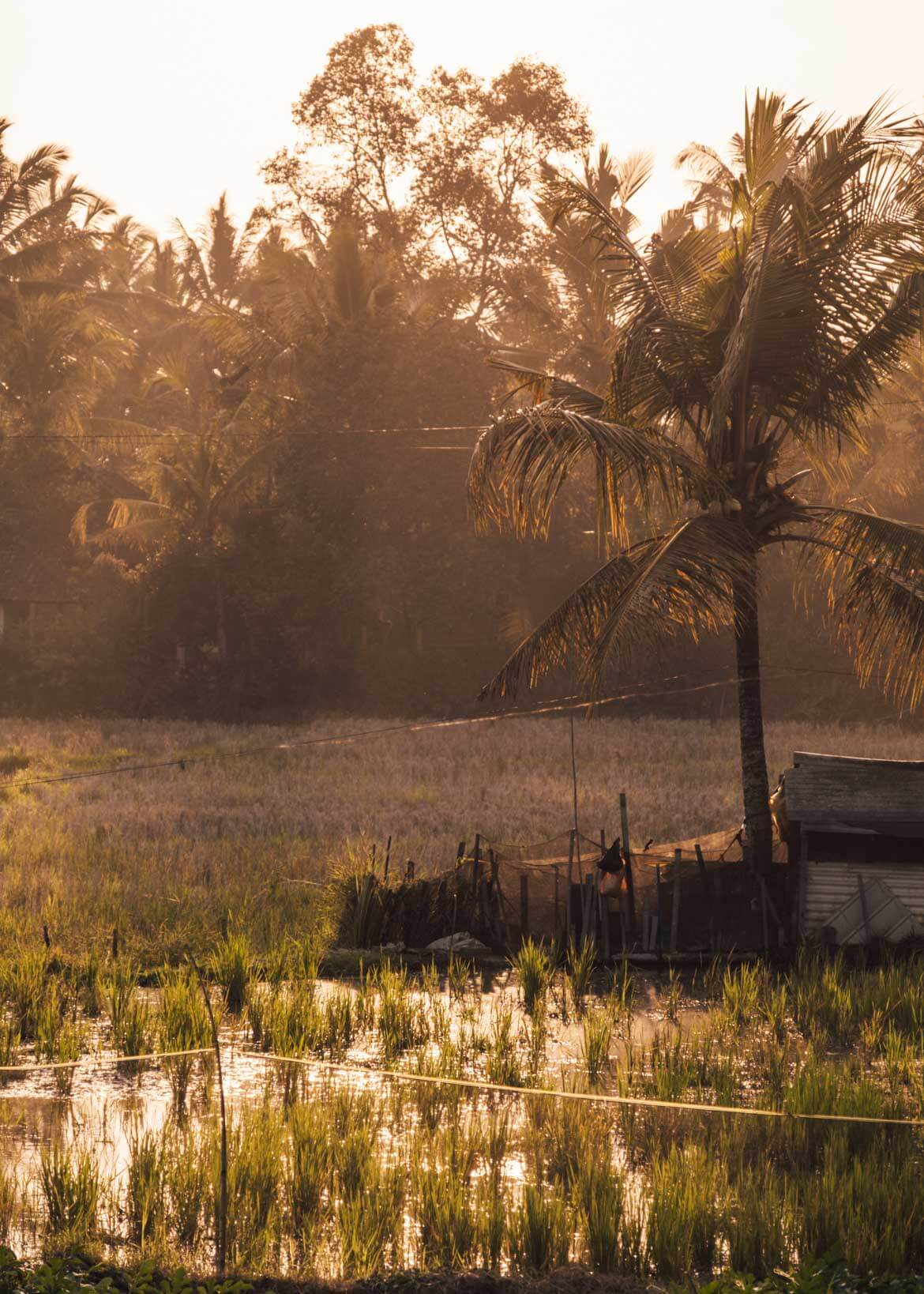 Itinerario tra risaie a Ubud tramonto