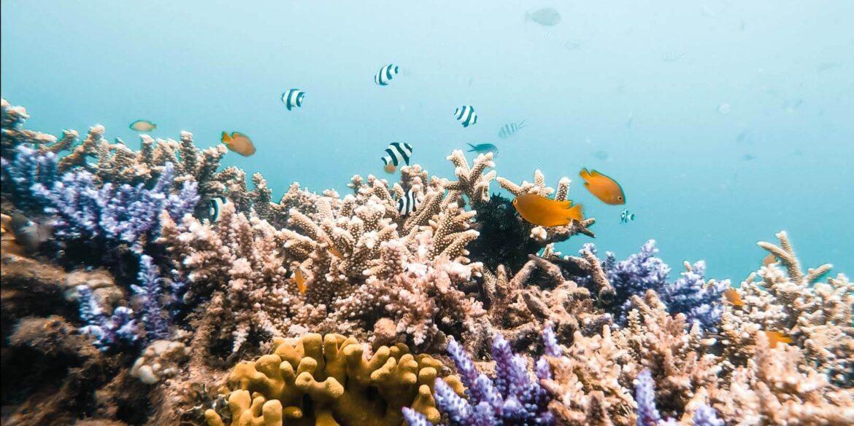Snorkeling responsabile sostenibile consigli